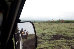 a peace of safari